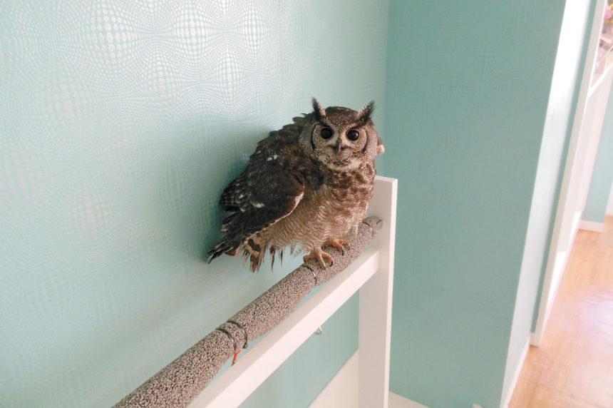 フクロウcafe Sweet Owl様